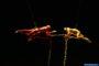 """Carnevale a Gaeta 2020! 23 febbraio in Piazza XIX Maggio alle ore 18, gli spettacoli """"In Dies"""" e """"Danza Aerea"""" della Compagnia dei Folli"""